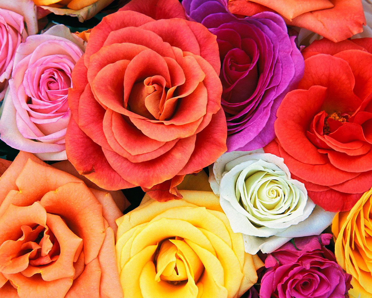 18 of our favorite flowers our blog 4 rose izmirmasajfo